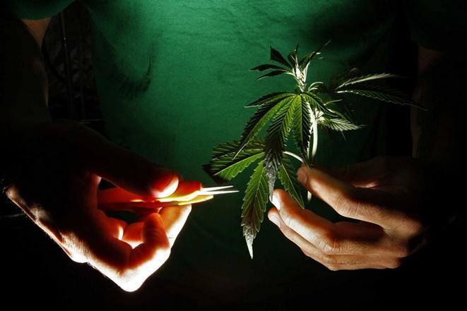 США легализуют марихуану в штатах Колорадо и Вашингтон. Фотографии