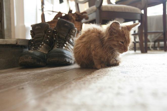 Парень нашел на дороге умирающего котенка и назвал его Чито