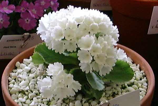 цветы комнатные фото и названия - Сумки