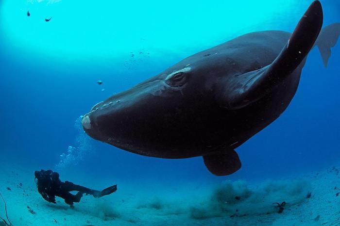 Самые редкие морские млекопитающие
