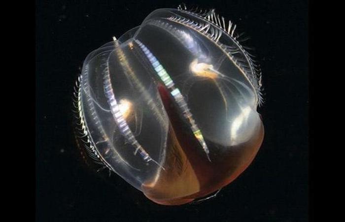 Фотограф Стив Блум: невероятный подводный мир Земли
