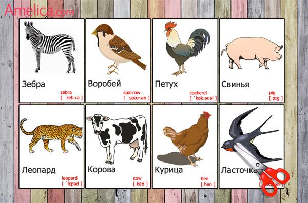 Развивающие карточки с картинками животных для детей на ...