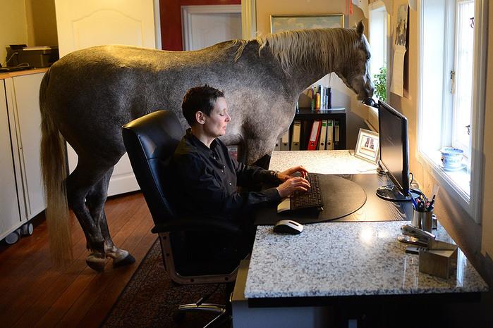 Как провести время со своей лошадью? Всё, кроме верховой езды