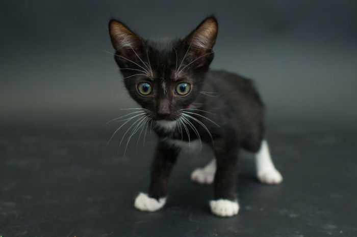 «Если черный кот дорогу перейдет»   это к несчастью?