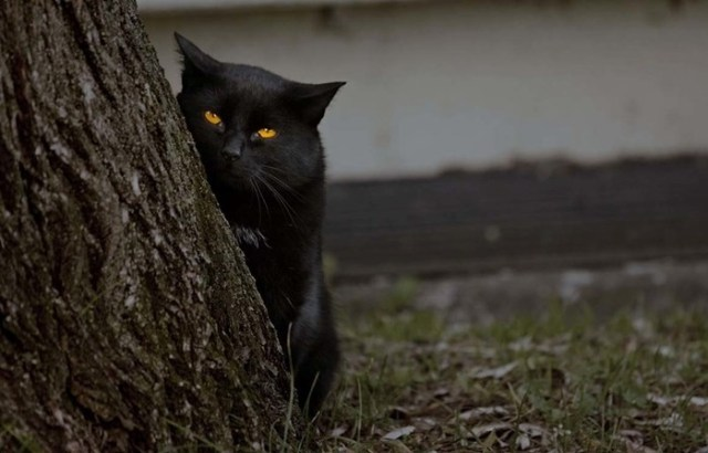 Может ли кошка видеть в темноте на самом деле?