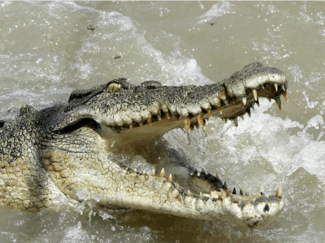 15 самых опасных для человека животных в мире