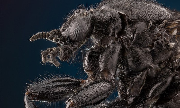 8 опаснейших паразитов, затаившихся в вашей еде