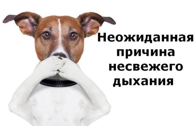 Самая распространенная причина запаха изо рта