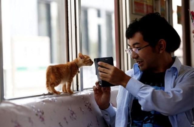 В Японии запустили поезд с кошками
