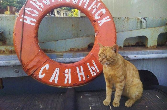 Хвостатые и пернатые друзья человека на кораблях
