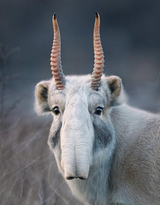 Фотографии животных из книги Тима Флача «Под угрозой исчезновения»