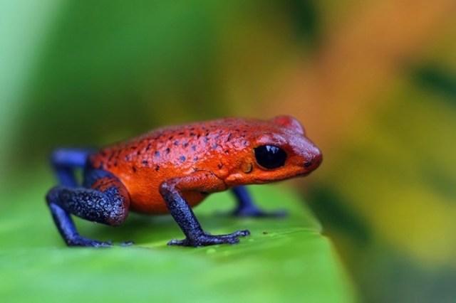 Самые ядовитые существа на планете и как действуют их яды