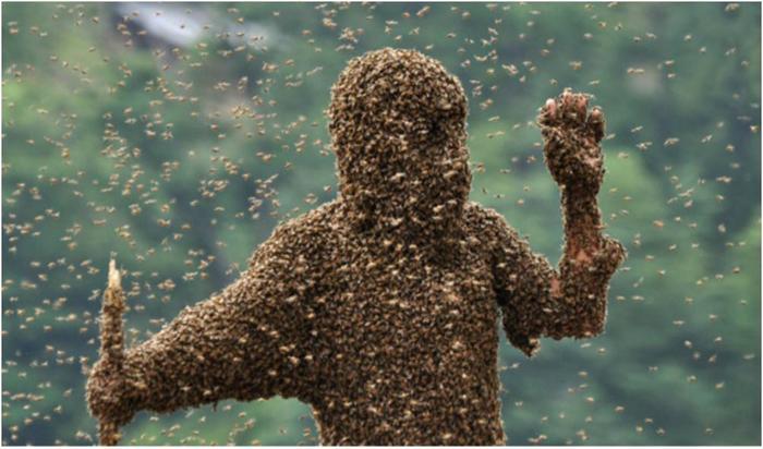 Самые масштабные нашествия насекомых в истории. Казнь египетская наяву!