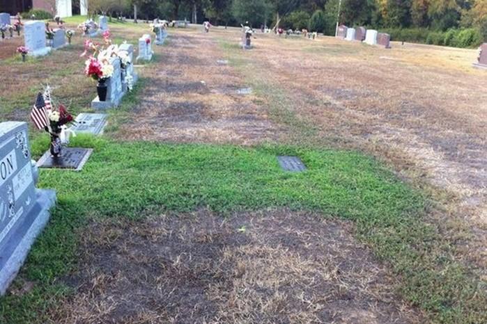 Мать не понимала, почему могила сына оставалась зеленой даже в засушливые дни