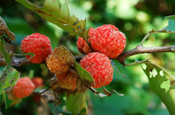 Как выглядят экзотические деревья с продуктами на ветках