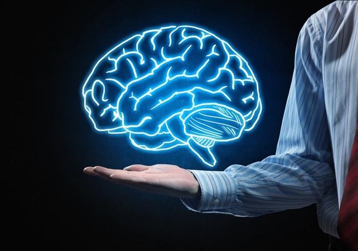 Человеческий мозг— одно из величайших творений эволюции?