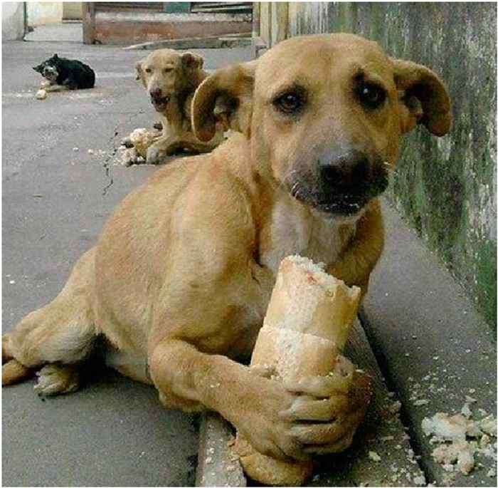 Как отбиться от стаи собак