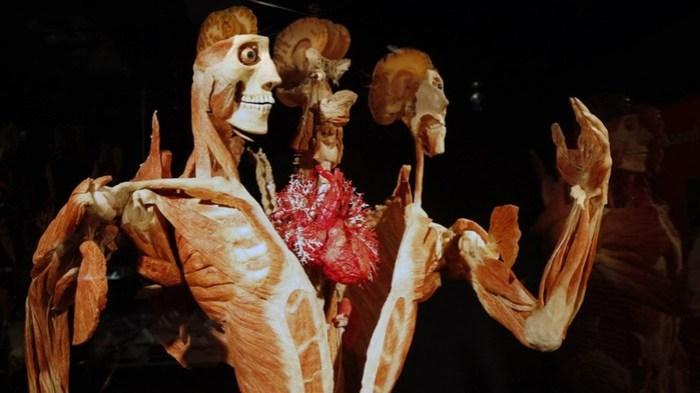 Что происходит с телами, которые после смерти завещают науке