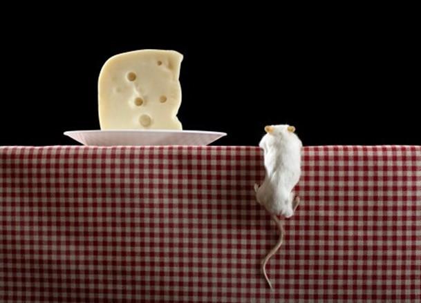 Популярное заблуждение о мышах и сыре
