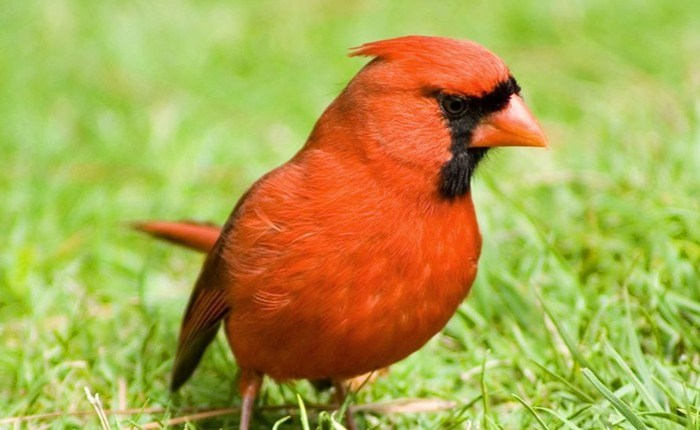 Какие птицы самые опасные в мире
