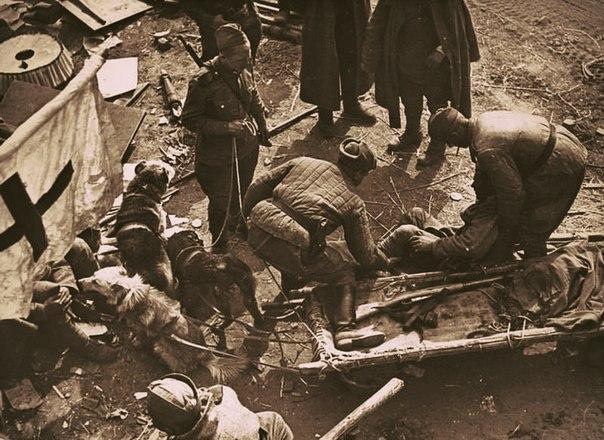 Какие советские города первыми подверглись атаке 22июня 1941 года
