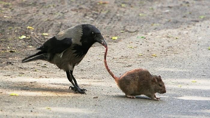 Примеры потрясающей изобретательности животных, которой от них никто не ожидает!