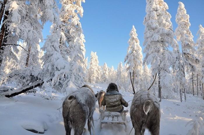 Как изменился климат в средней полосе России за последние 30 лет