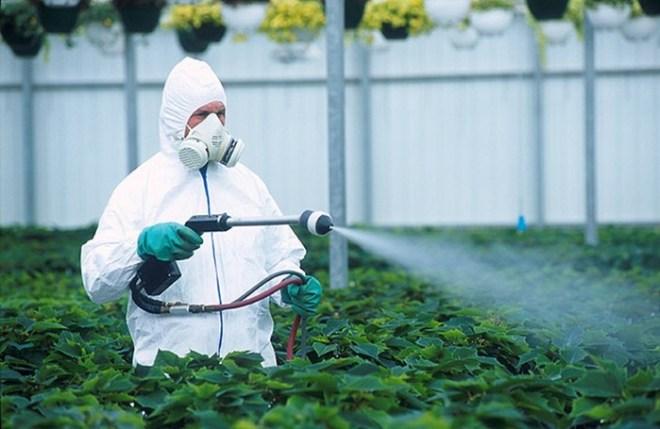 В США назвали фрукты и овощи с самым большим содержанием пестицидов