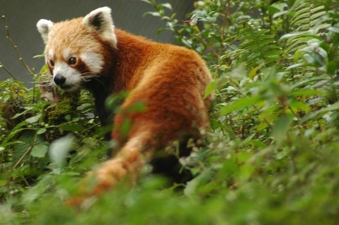 Удивительные галлы: секреты и рекорды животного мира