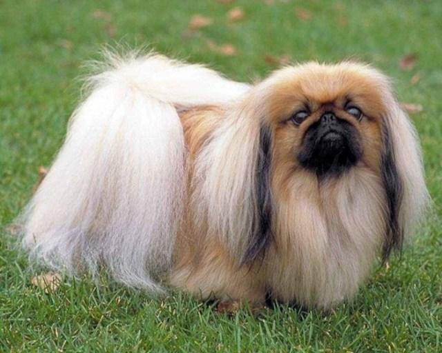 10 самых древних пород собак