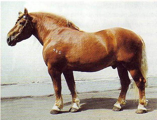 7 главных пород русских коней