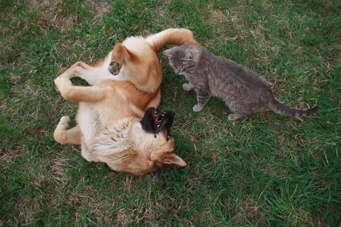 Неразлучные друзья кот Платон и щенок Булька