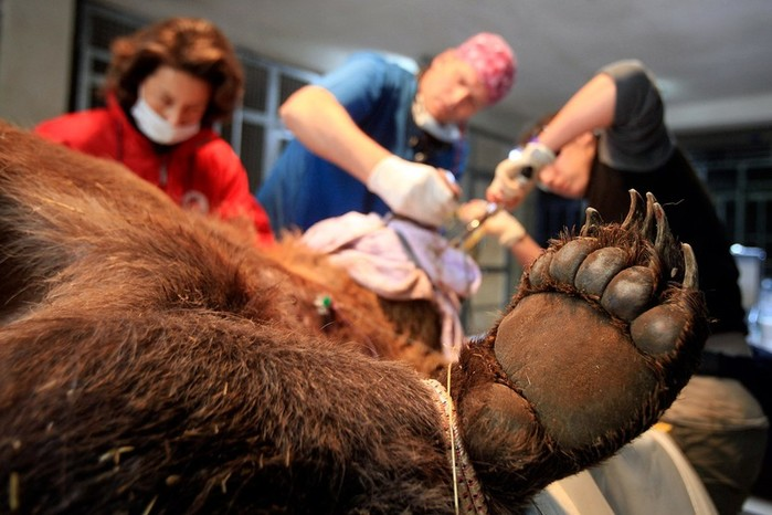 Как работает скорая помощь для животных: фотографии