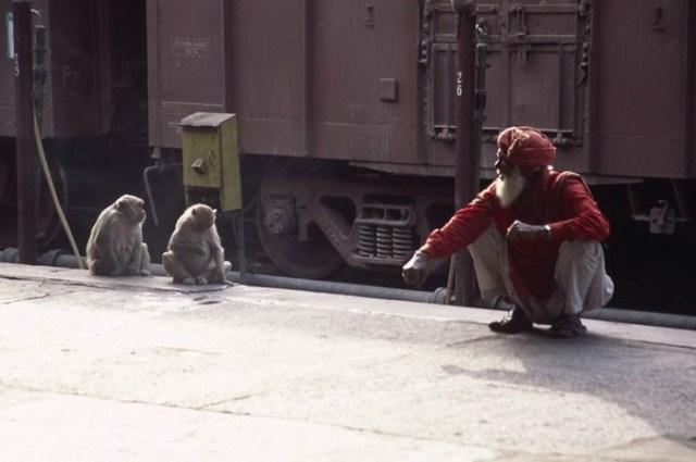 Какими орудиями труда пользуются животные