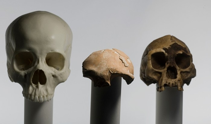 Ученых не на шутку озадачили карлики с острова Флорес: «хоббиты какие то»