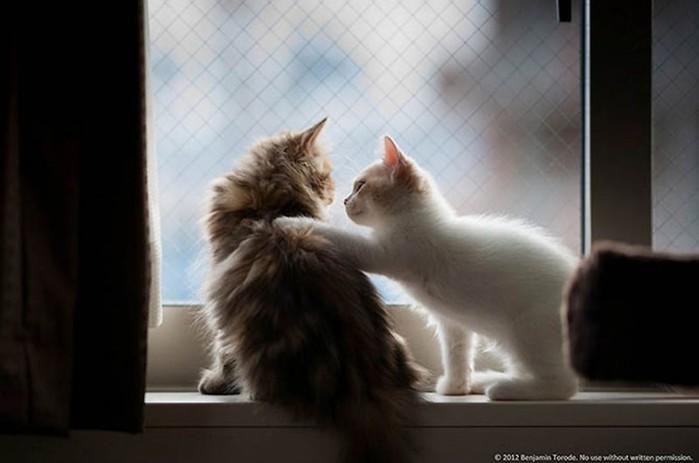 Самые милые друзья— кошки Дейзи и Ханна