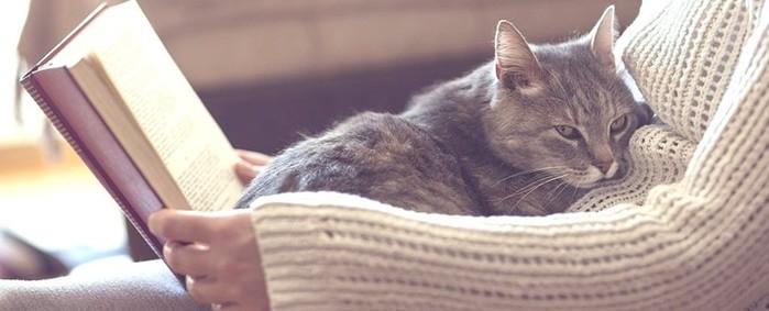 Почему кошки мнут нас своими лапками
