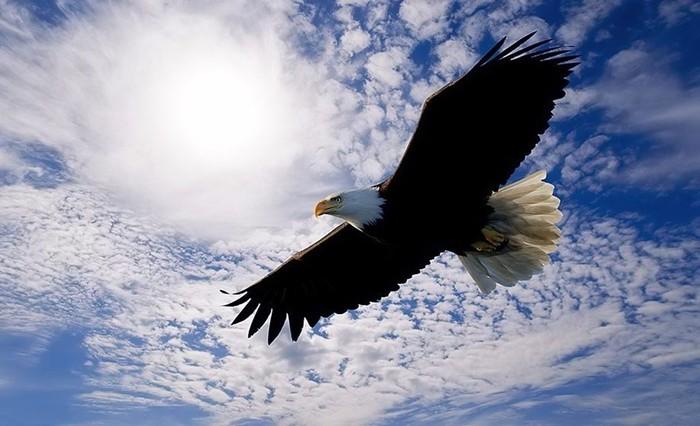 Что делает орел, когда доживает до старости: есть чему поучиться!
