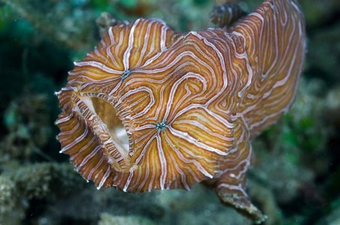 Редкие рыбы в морских глубинах: 10 фотографий