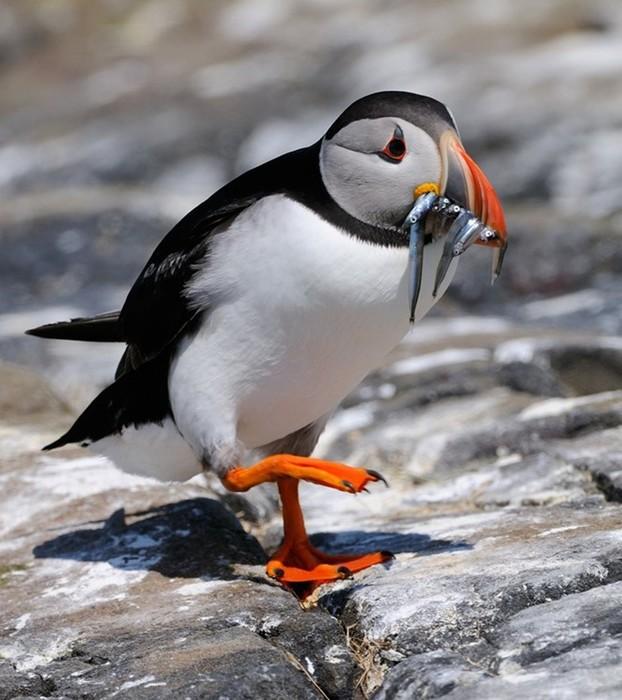 Пташки: красиві фотографії