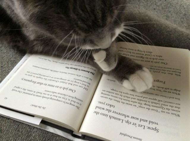 Работа переводчика изнутри: верить ли переводам английских книг