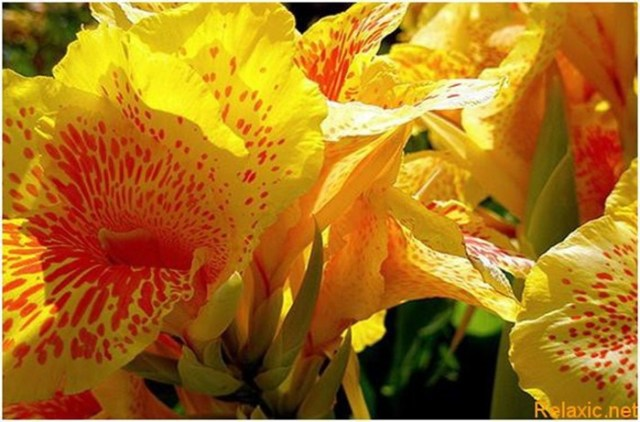 10 самых красивых цветов в мире