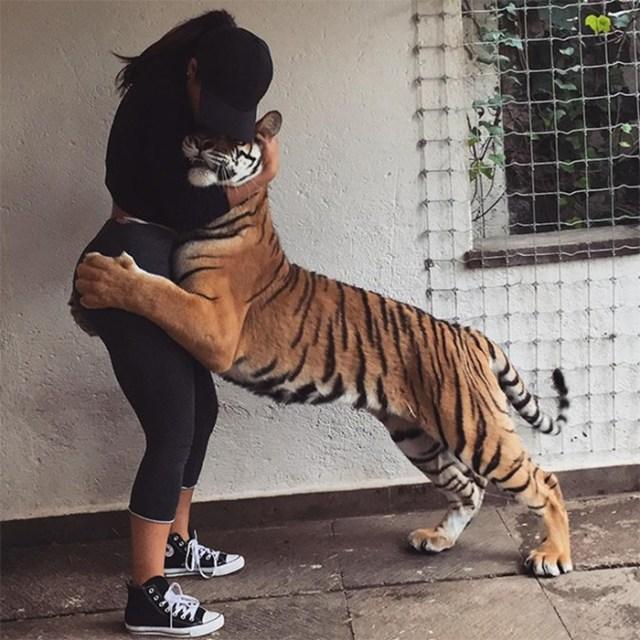 10 самых популярных Instagram аккаунтов о животных: когда тигр— лучший друг