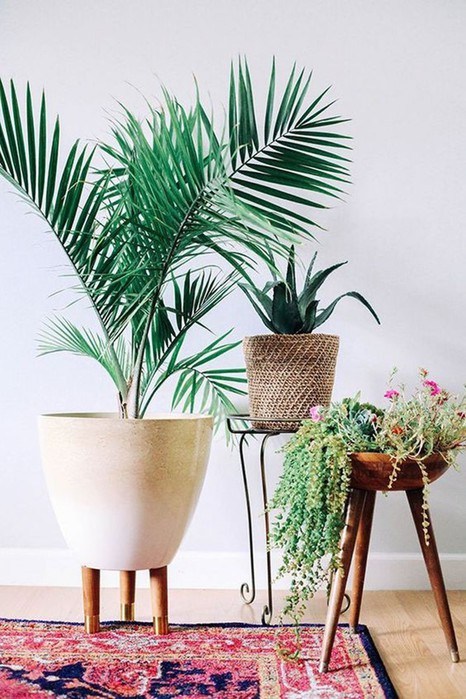 9 растений, которые приживутся в ванной