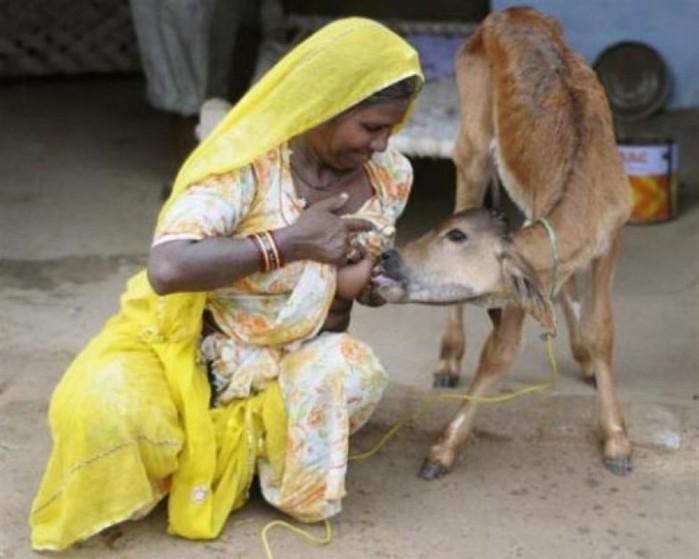 Фотофакт: Женщины кормят грудью детёнышей животных (фото, видео)