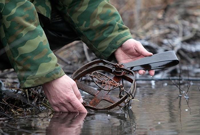 Видео, как Саратовской области борются с бобрами