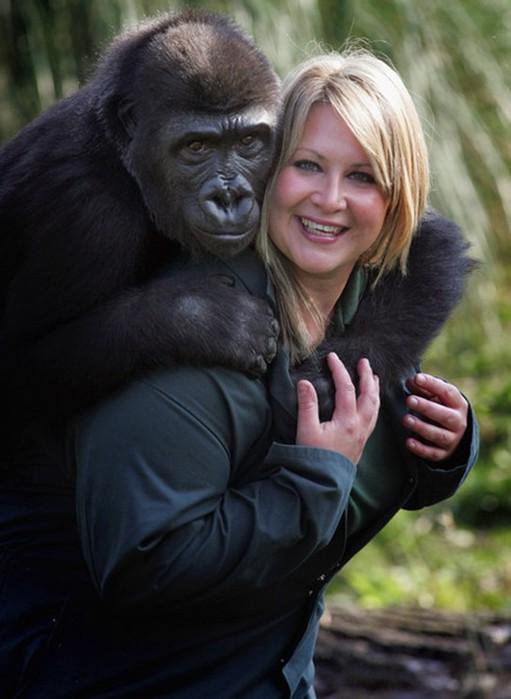 Сотруднице американского зоопарка пришлось стать гориллой