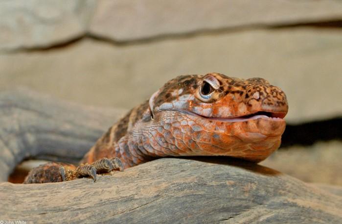 «Почти динозавр» родился в зоопарке в Москве