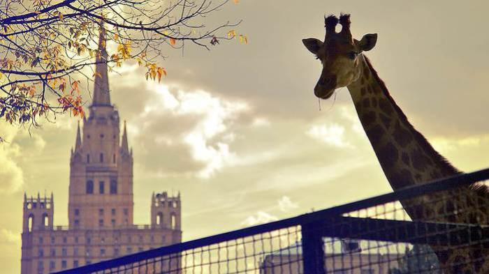 Как посетители Московского зоопарка реагируют на животных, а звери— на людей