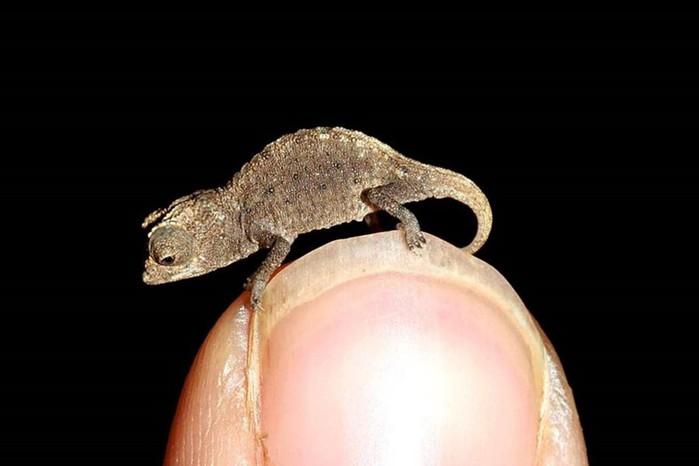 Самые маленькие животные в мире: фото удивительных созданий нашей планеты